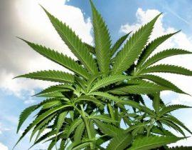 cura epilessia cannabis