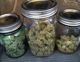 cannabis e glaucoma