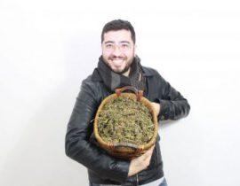 titolazione della cannabis