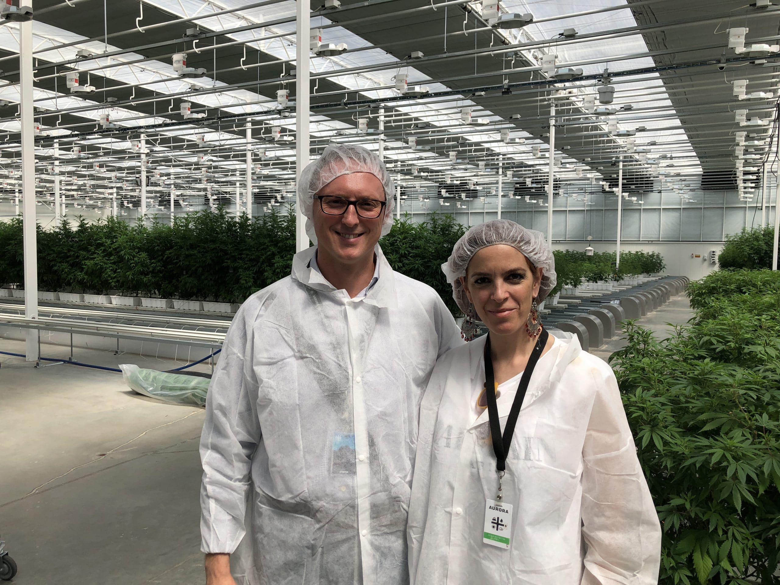 cannabis canadese