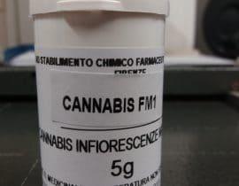 cannabis FM1