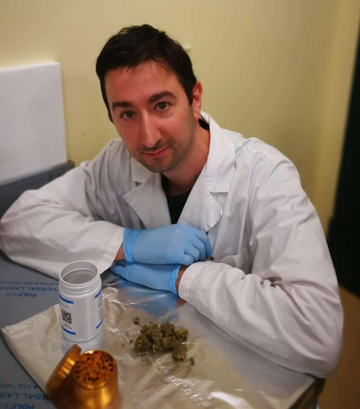 titolare la cannabis