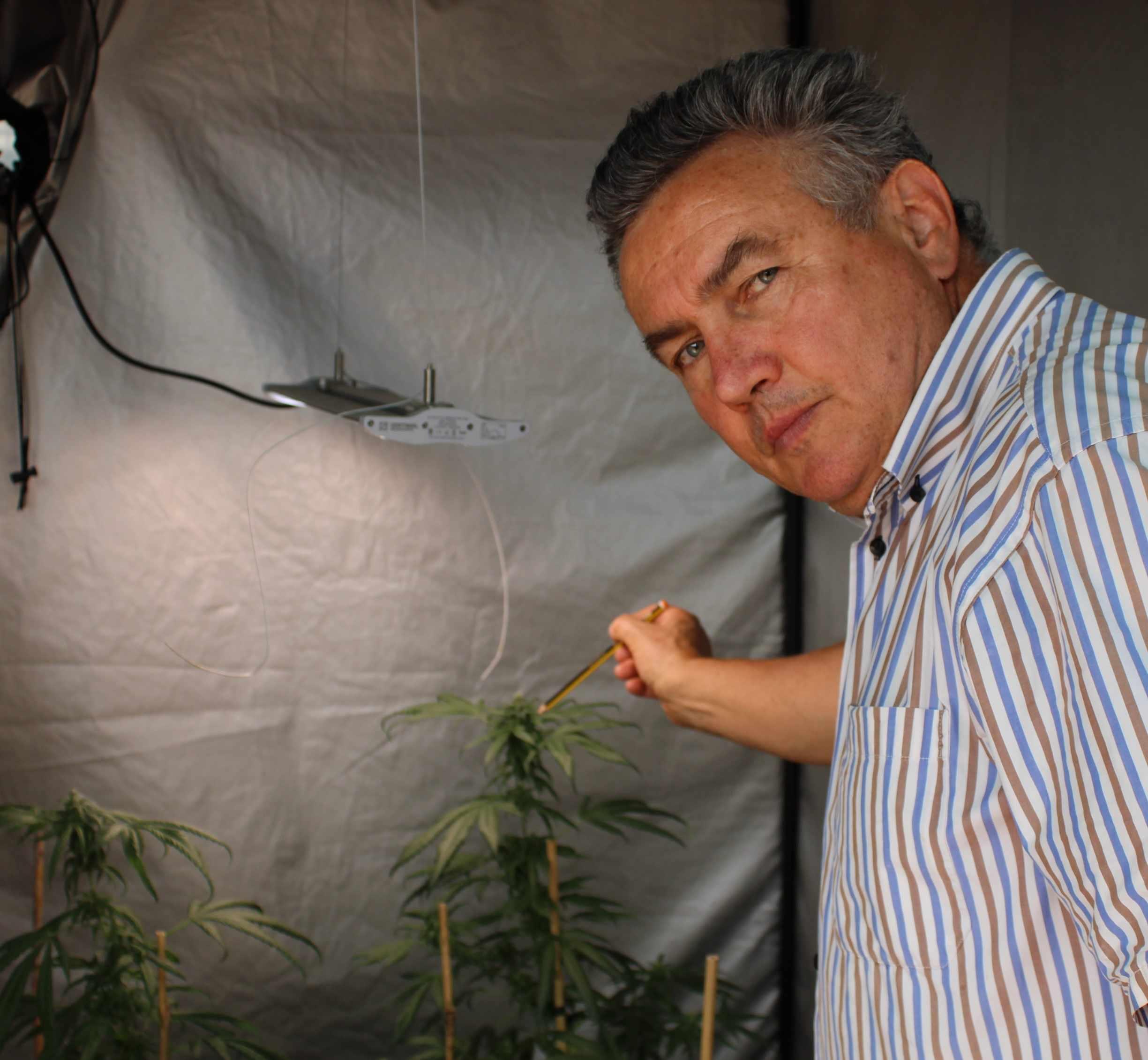 cannabis medica italiana
