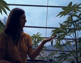 cefalea farmacoresistente cannabis